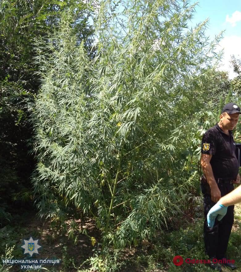 Одесская область: полиция Арциза обнаружила коноплю и оружие