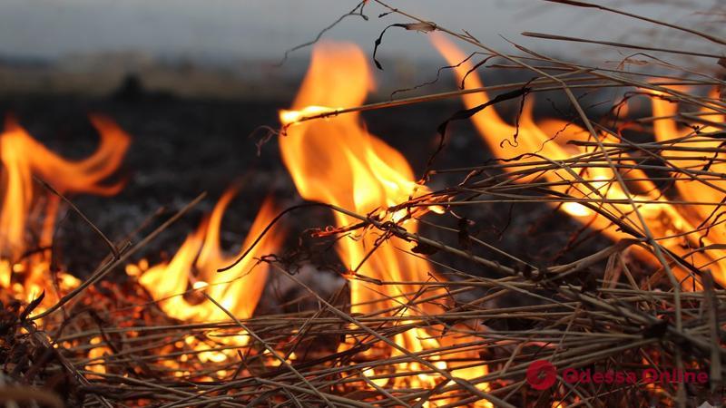В Одесской области пожар уничтожил полторы тонны сена
