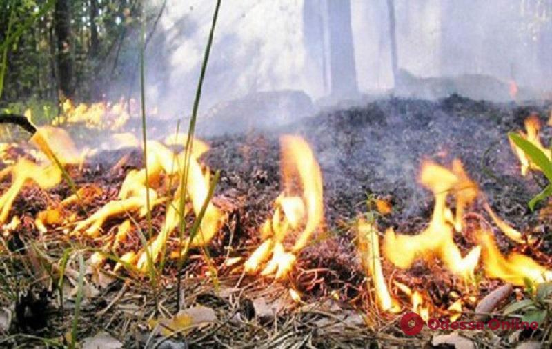 Одесская область: синоптики предупреждают о чрезвычайной пожарной опасности