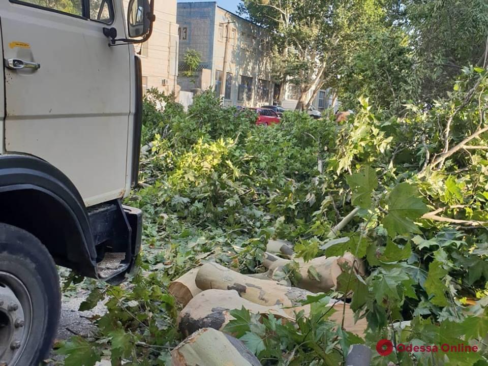 Огромное дерево упало на фуру на Пересыпи в Одессе