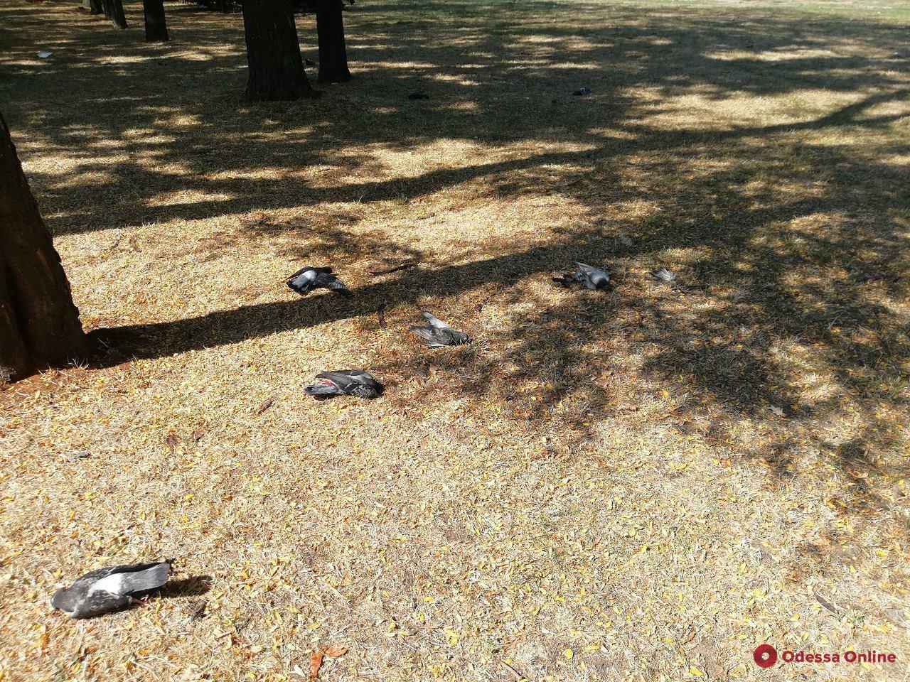 В Одессе продолжают массово гибнуть голуби