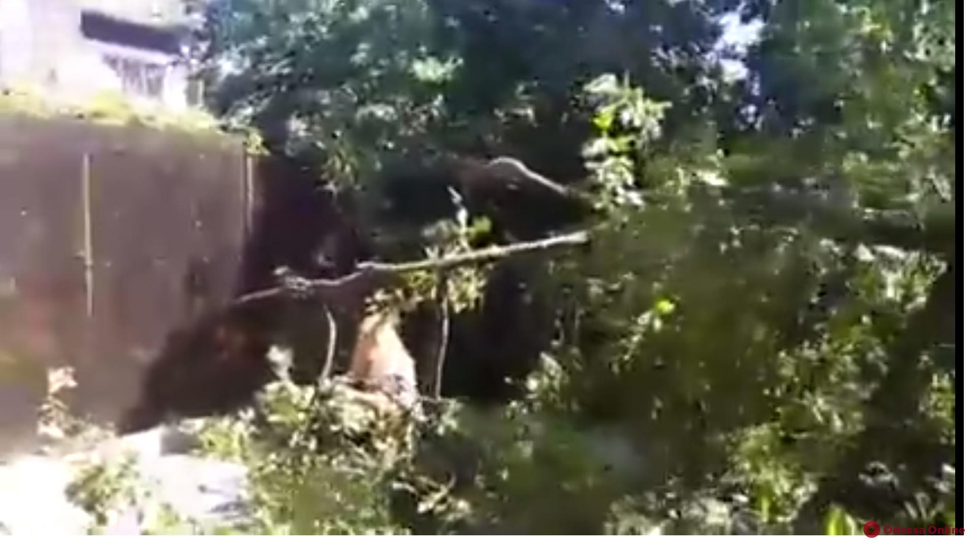 Под Одессой неизвестные уничтожают деревья (видео)