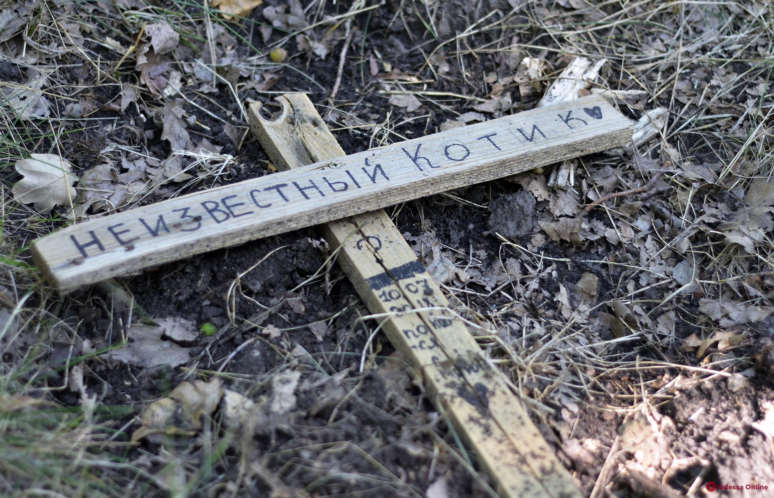 Одесское кладбище домашних животных: вынужденная необходимость