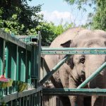 слон зоопарк