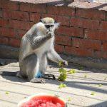 обезьяна зоопарк