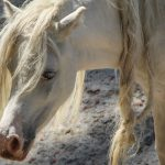 лошадь зоопарк