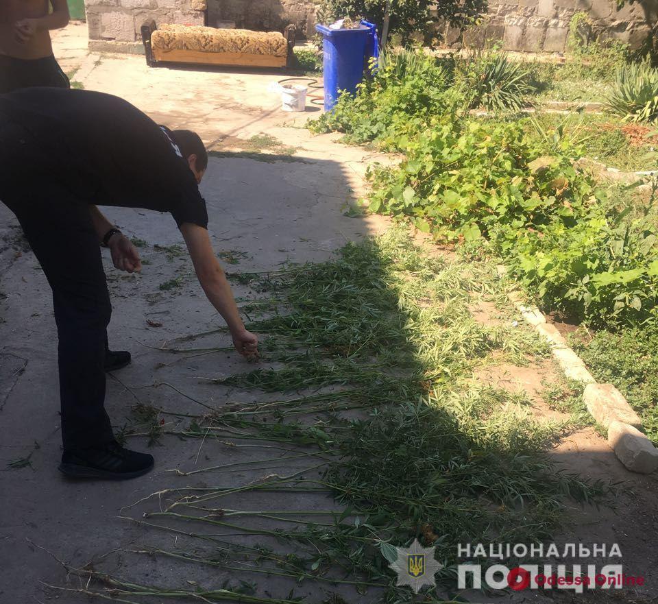 В Одессе на Таирова нашли плантацию конопли