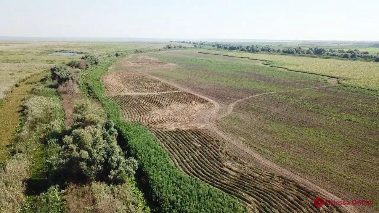 Одесская область: пограничники и полицейские нашли 10тысяч кустов конопли
