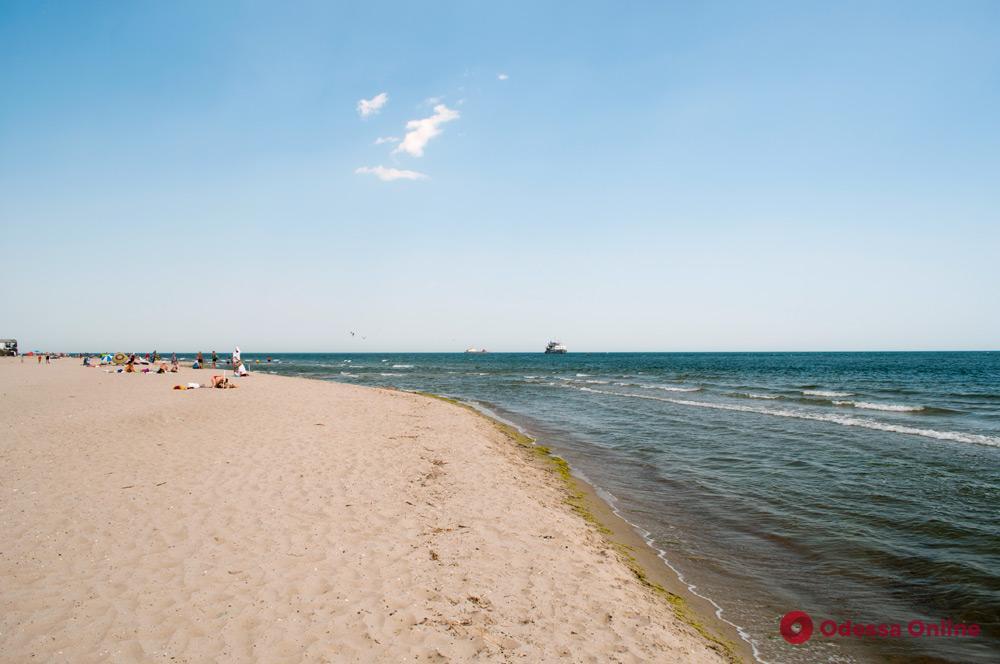 На пляж в Затоке выбросило мертвого дельфина
