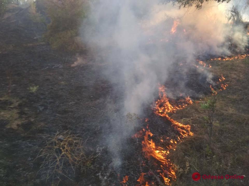 В Одесской области сгорели 2 гектара травы и кустарника