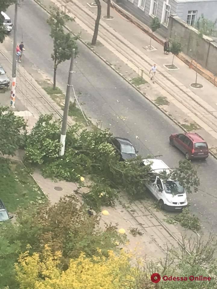 В Одессе из-за падения деревьев приостановлено движение двух трамвайных маршрутов