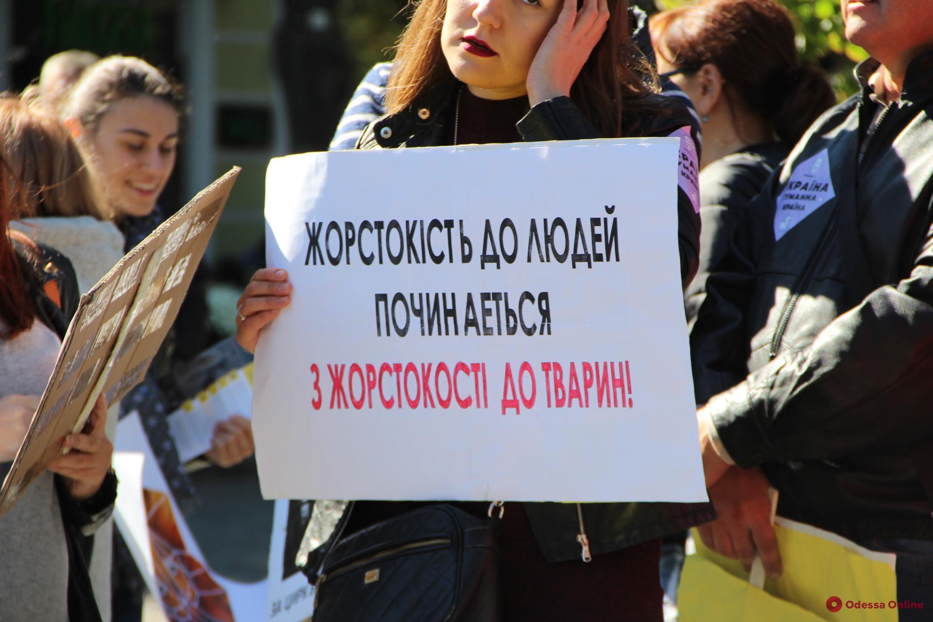 В Одессе пройдет всеукраинский марш за права животных