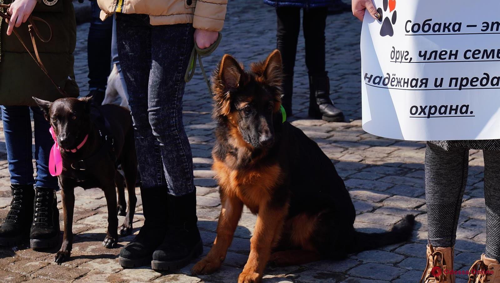 В Одессе пройдет второй марш спасенных собак