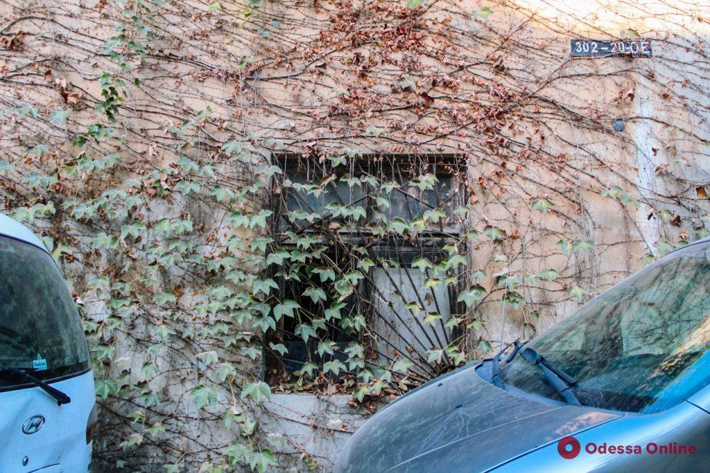 Зелёная Одесса: увитые плющом и виноградом дома(фото)