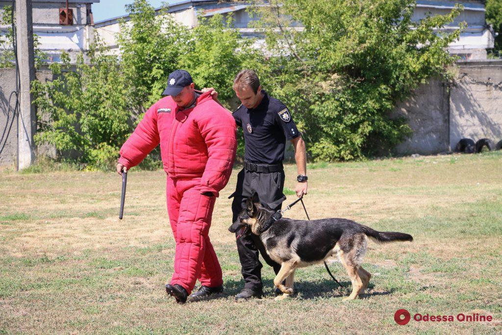 Четвероногие полицейские: часто от них зависит очень многое