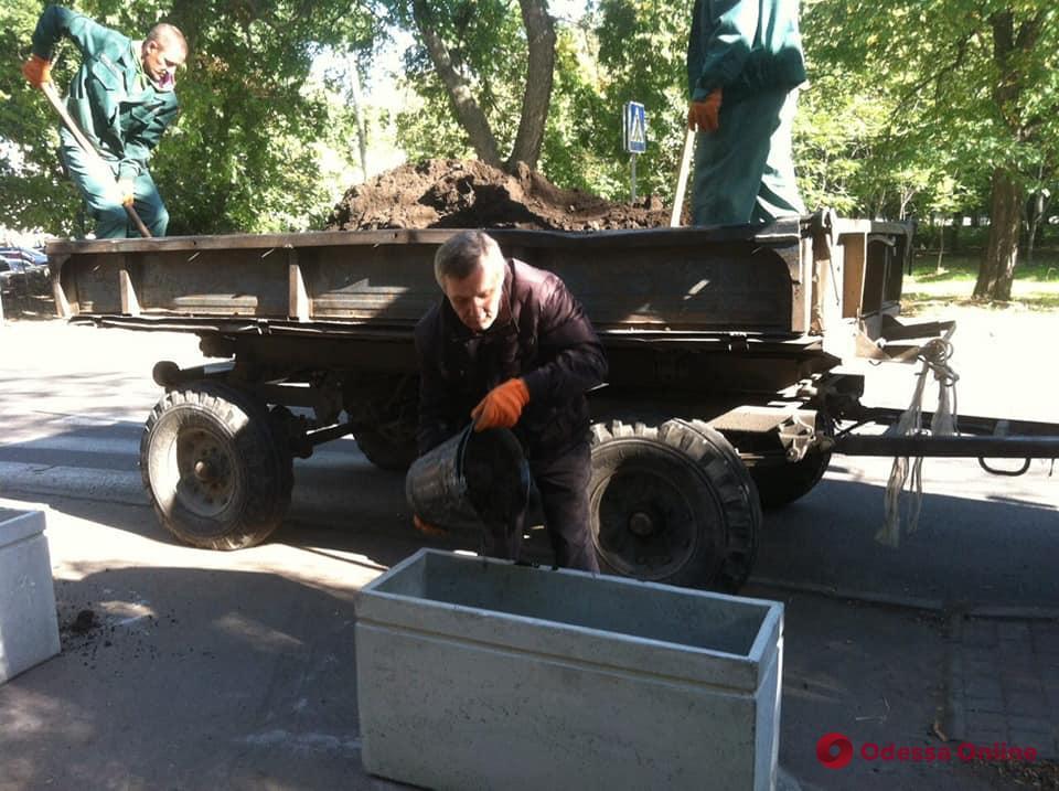 Клумбы против машин: в одесских парках устанавливают антипарковочные элементы