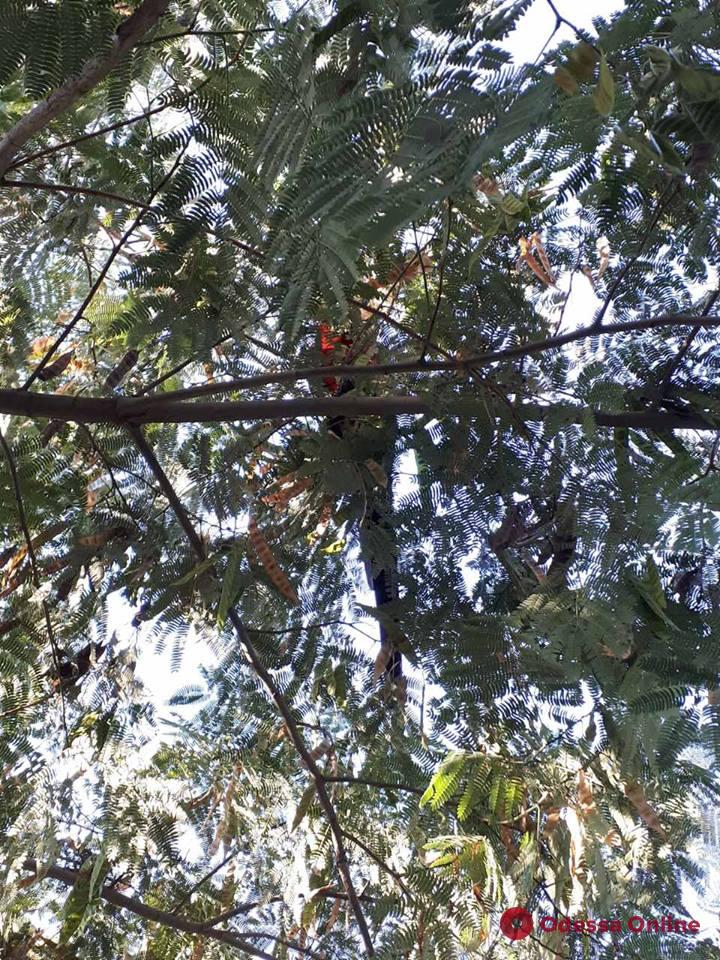 Ловите попугая: по Одессе летает ара (фотофакт)