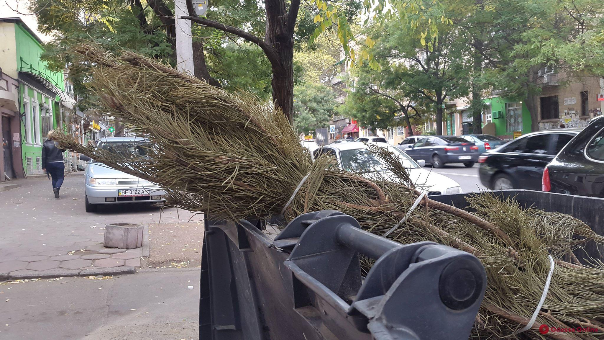 Одессит выбросил сосну за два месяца до Нового года (фотофакт)