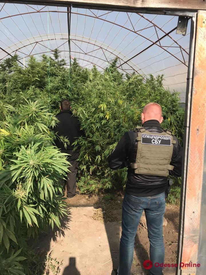 В Одесской области блокировали деятельность наркогруппировки (фото)