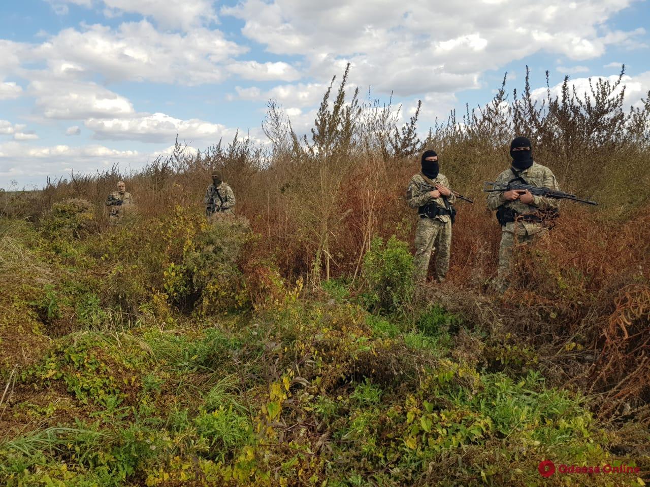 В Одесской области нашли целое поле конопли (фото, видео)
