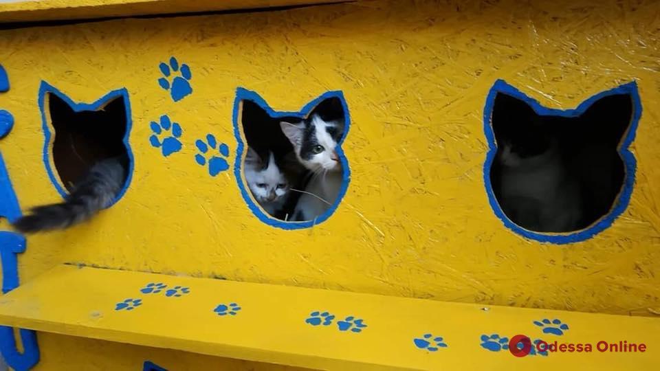 Одесса: в кошкин дом на Пастера заселились первые хвостатые обитатели (фото)