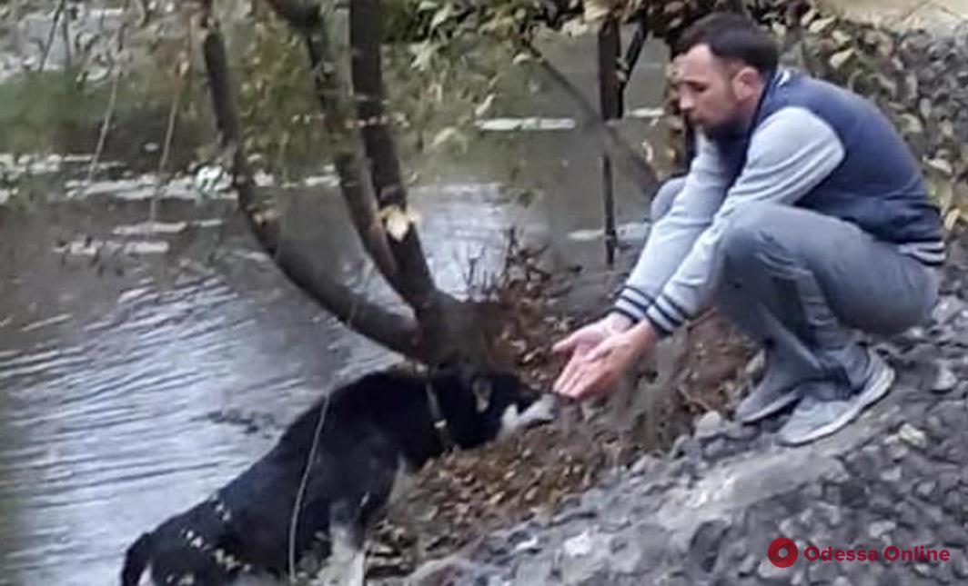 Одесситы спасли застрявшую на островке собаку (видео)