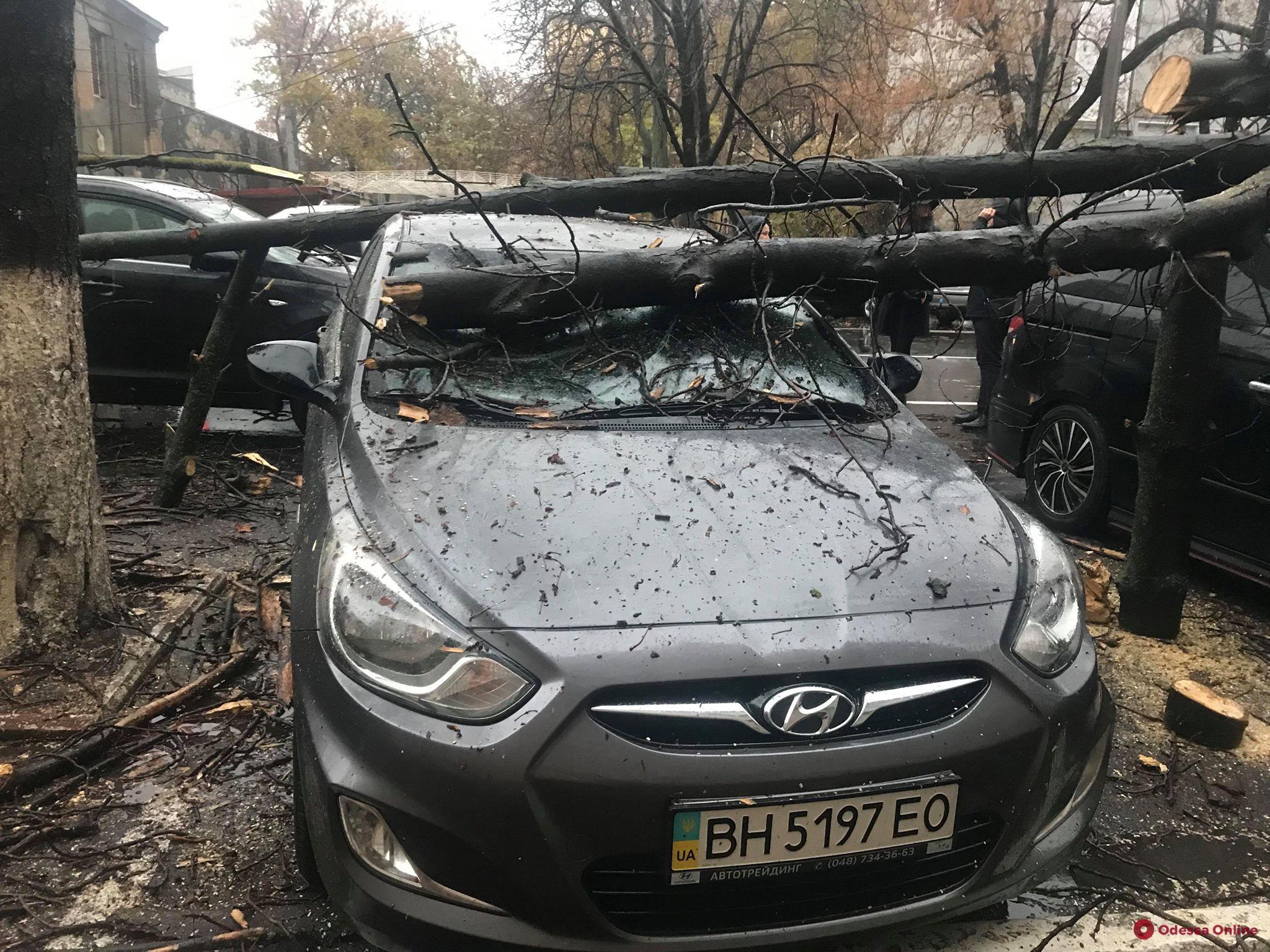 В Одессе ветка дерева упала на автомобиль активиста