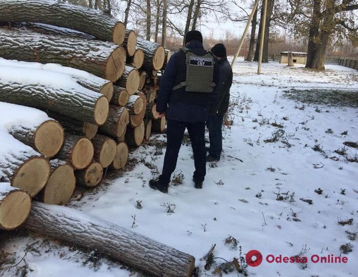 В Одесской области блокировали сбыт древесины на полтора миллиона гривен (фото)