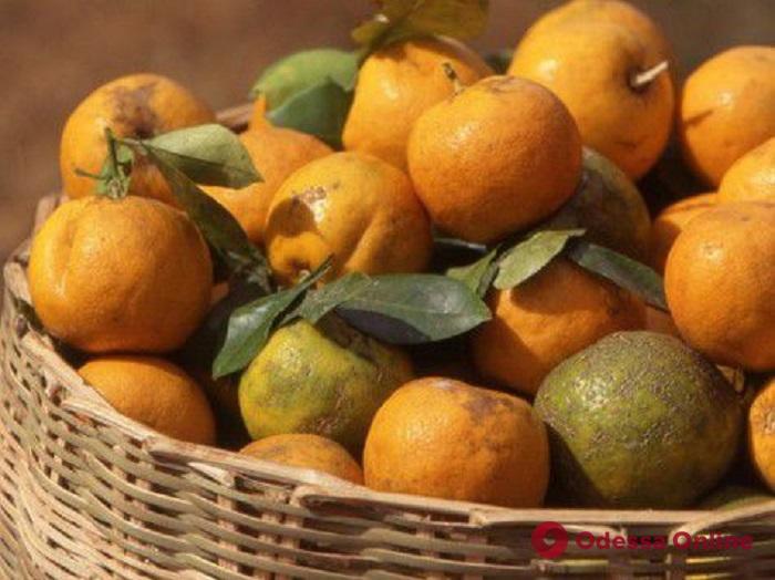 В Одессу доставили мандарины с личинками средиземноморской мухи