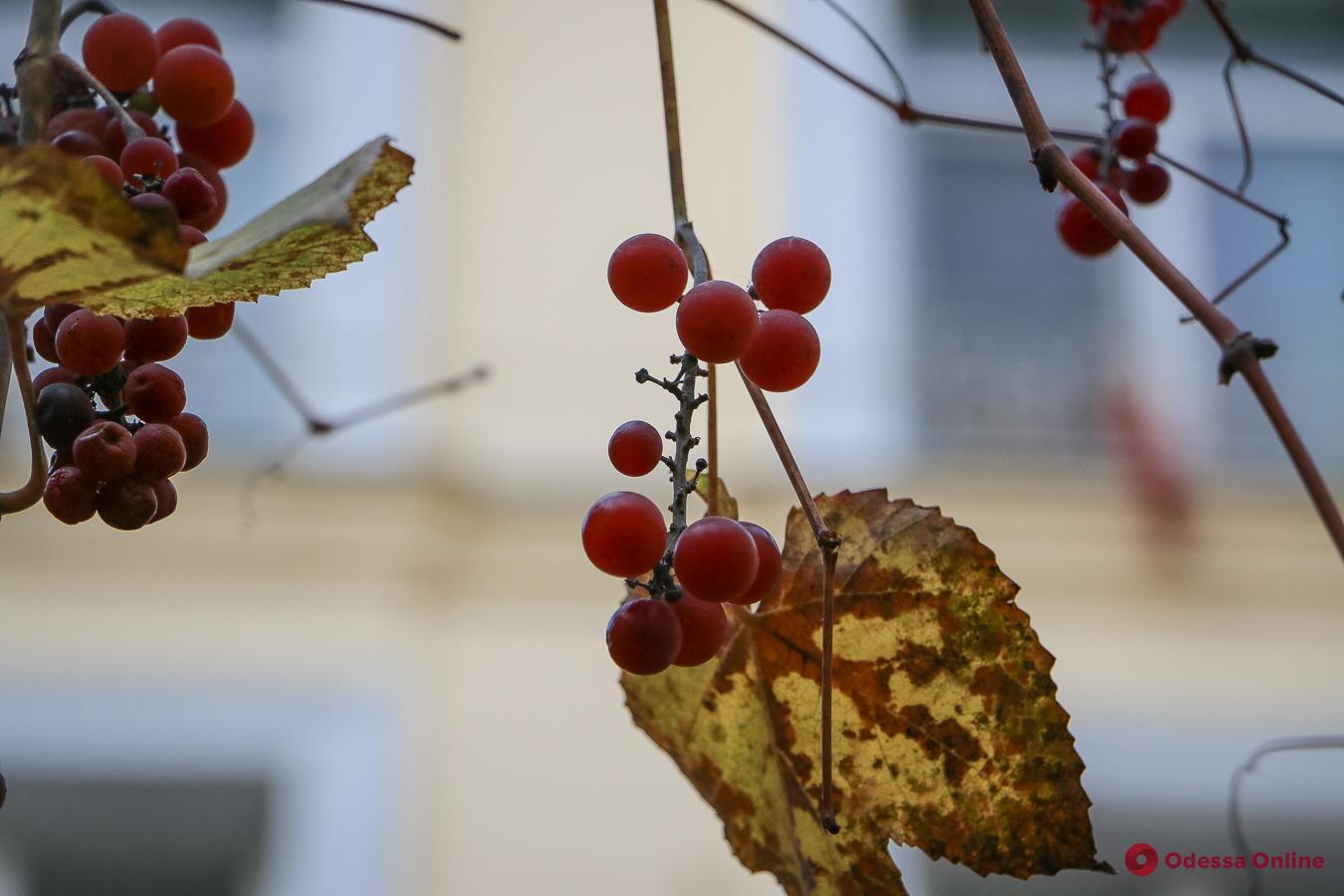 Какая погода ожидает одесситов 24 ноября