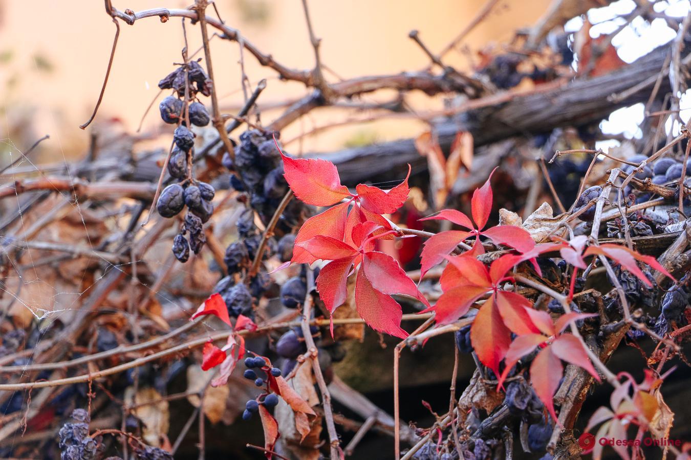 Теплая палитра одесского ноября (фоторепортаж)
