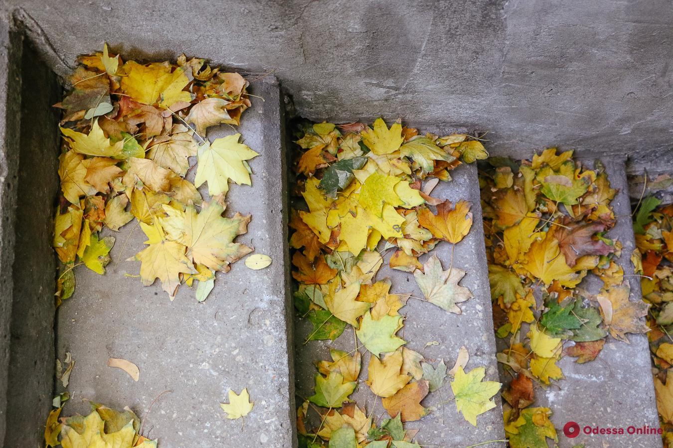 Какая погода ожидает одесситов 27 ноября