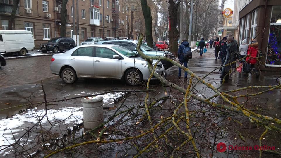 В центре Одессы ветка дерева упала на автомобили