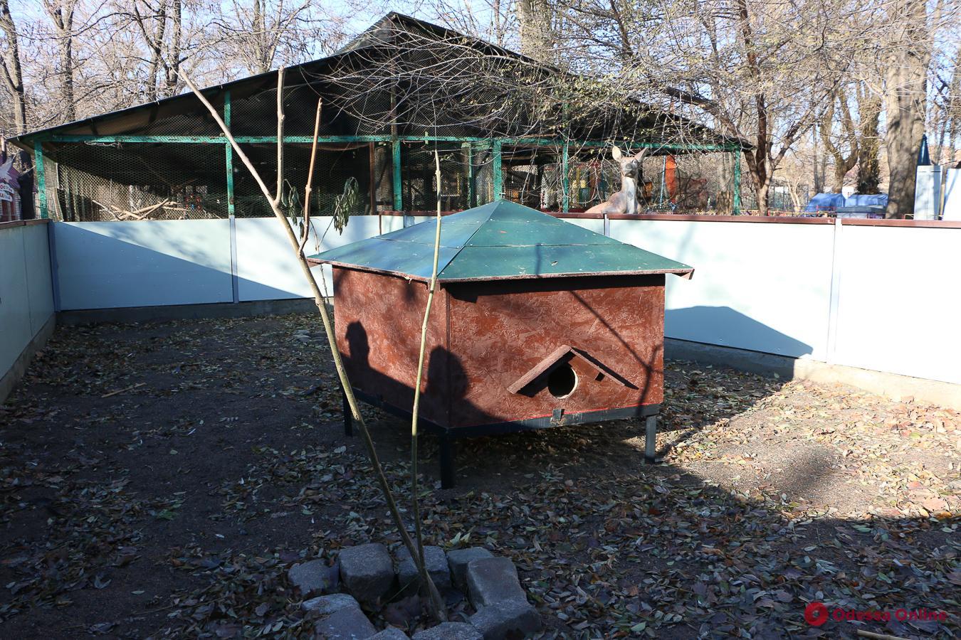Спячка и логово: кто и как зимует в Одесском зоопарке