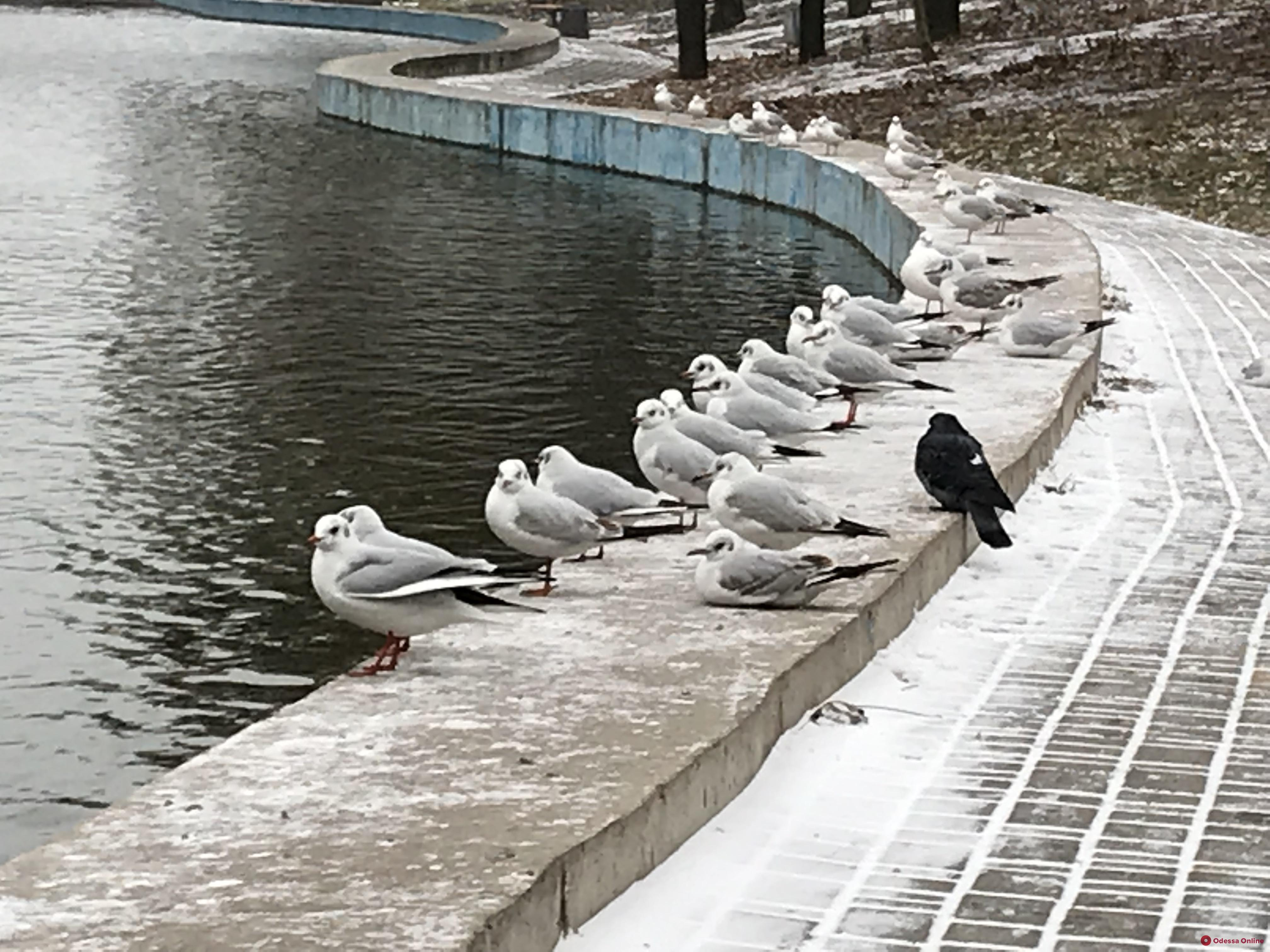Утиные истории: как зимуют птицы в парке Победы
