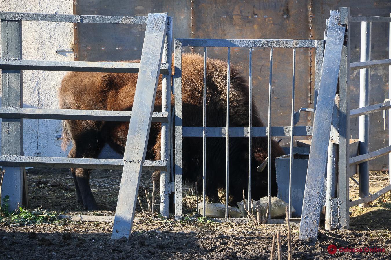 В Одесском зоопарке появились новоселы