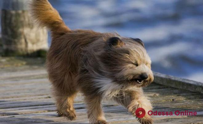 В Одессе из-за ветра и гололедицы объявлено штормовое предупреждение
