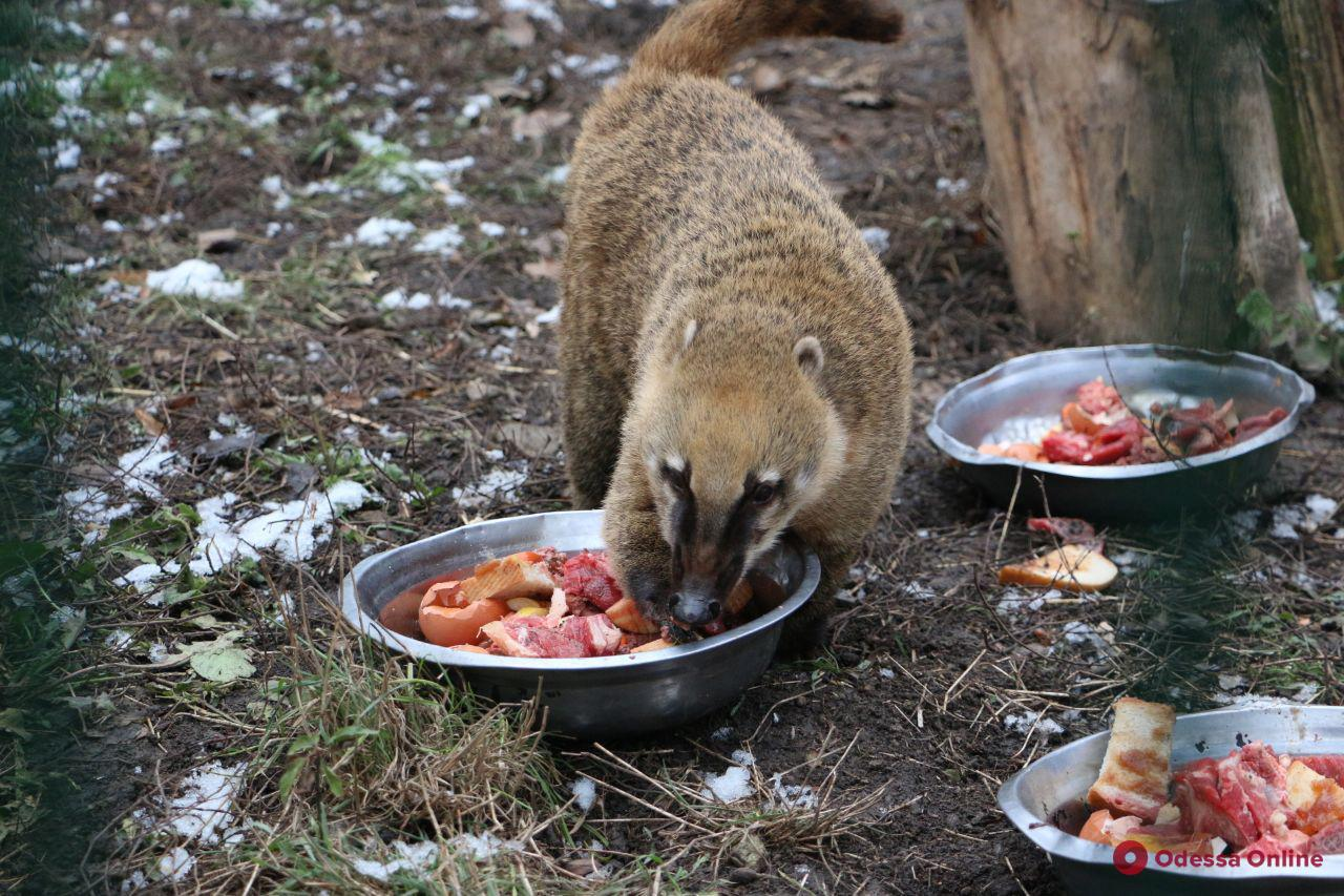 В Одесском зоопарке отпраздновали День Святого Николая (фото)