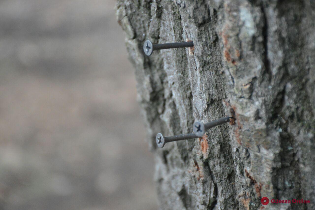 «Шипование» деревьев на 411-й батарее: в мэрии готовятся подавать заявление в полицию