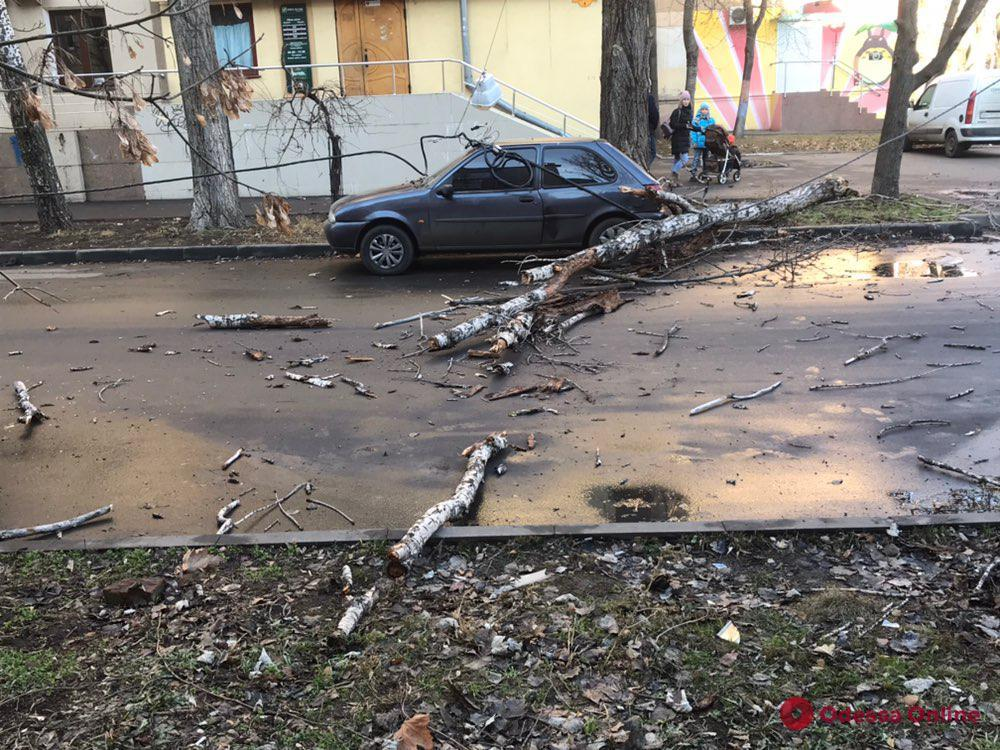 В Одессе дерево упало и оборвало провода