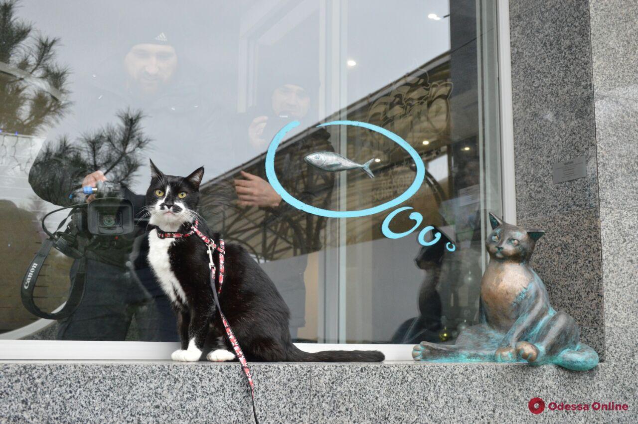На одесском побережье «поселился» кот Челентано