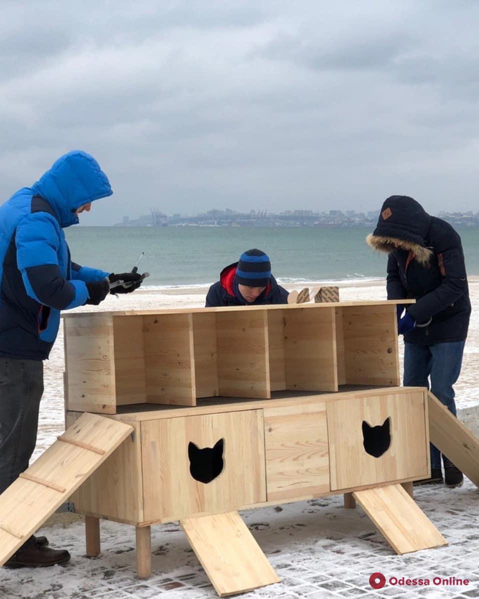 Спасти от морозов: в Лузановке появился домик для кошек