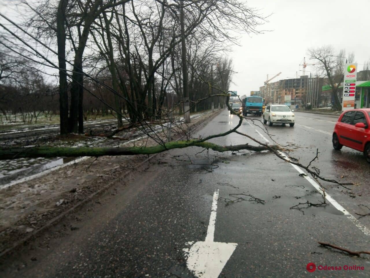 На поселке Котовского патрульные освободили дорогу от упавшей ветки