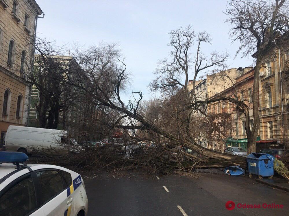 Упавшее дерево полностью перекрыло улицу Елисаветинскую