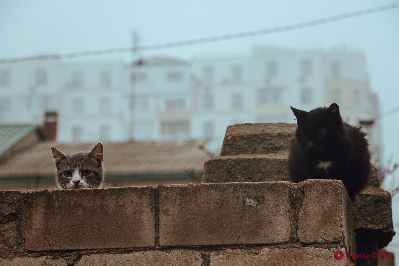 Мягкие, пушистые и произведения искусства: фотоподборка одесских мурлык ко Дню кота