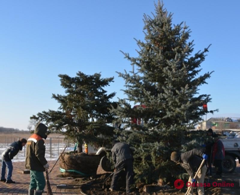 В измаильском парке вместо изуродованной ели высадили новое дерево