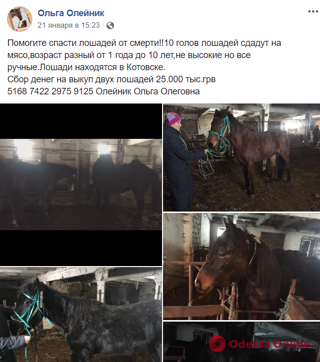 В Одесской области волонтеры пытаются спасти лошадей: хозяин продает их на мясо