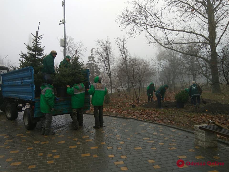В парке Победы высадили молодые ели