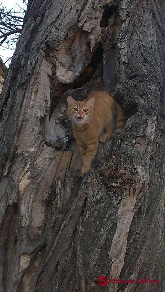 В Одессе неадекватный мужчина открыл стрельбу — погиб кот