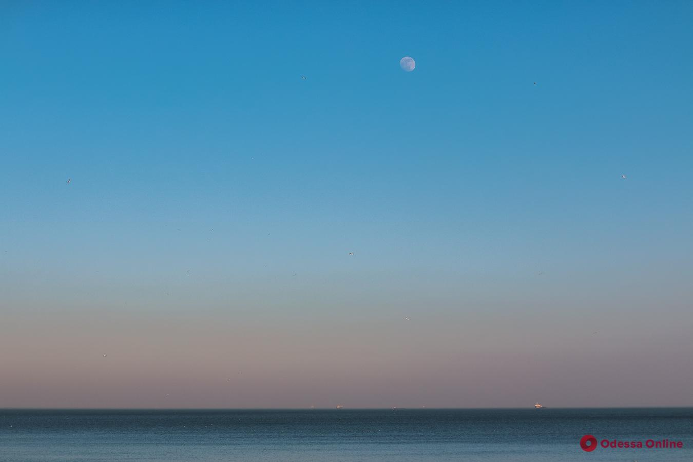Теплый февраль: сотни одесситов отдыхают у моря (фоторепортаж)